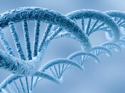 Qual é o comprimento do seu DNA?